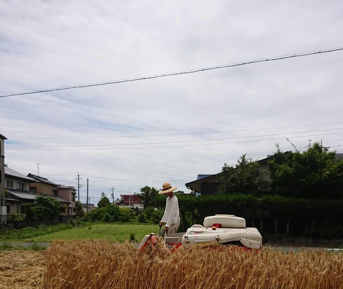 2021.5小麦収穫